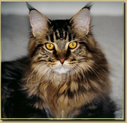 cat gz file