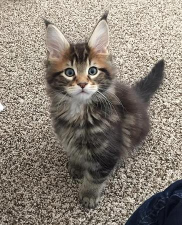 ohio cat due dates